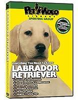 Labrador Retriever [並行輸入品]