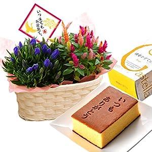 秋の寄せカゴ 焼印入はちみつカステラ 花とスイーツ フラワーギフト 鉢花 敬老の日 ギフト