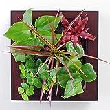 壁に掛ける観葉植物ミドリエデザイン フレームアンバー16