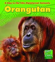 Orangutan (Day in the Life. Rainforest Animals)