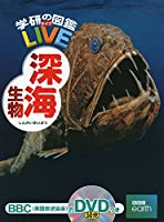 駿河湾 スルガビクニン 深海魚に関連した画像-06