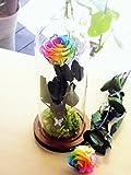 プリザーブドフラワー レインボーローズ ガラスドーム 茎までプリザーブドフラワー 美女と野獣風...