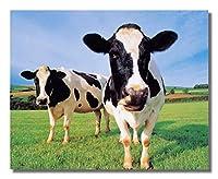 2つHolstein Cows Standing in Grassファームフォト壁画像8x 10アートプリント