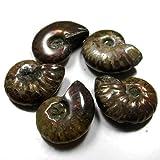 [adgadg] 5個組 24-23mm 計140ct マダガスカル産遊色アンモナイト 化石 希少 5526