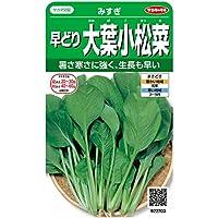 サカタのタネ 実咲野菜2703 早どり大葉小松菜 みすぎ 00922703