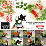 フル彩色フィギュア 金魚 立体図鑑 [全8種セット(フルコンプ)]