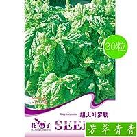 特大イロレ種子スパイス9階建てタワー 野菜種子屋外バルコニー 鉢植え野菜種子 1袋30粒