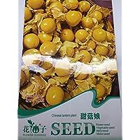 【 珍種子】 食用ほおずき (40粒入) 入荷まで1年待ち種子 育てやすい食用ほおずき