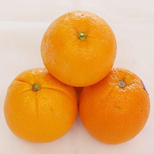 オレンジ 25玉 新鮮
