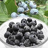冷凍ブルーベリー 約1kg 山形産 完熟 ブルーベリー 冷凍 フルーツ お菓子作り 様々なレシピで大活躍