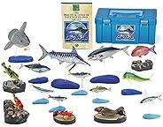 カロラータ 日本の海水魚 フィギュア ( 立体図鑑 ) 魚 リアル フィギュアボックス [解説書/スタンド付き] 食品衛生法クリア 15種