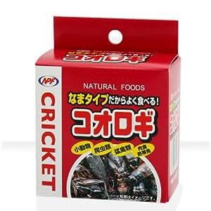 NPF コオロギ40g (コオロギ缶)×24個セット