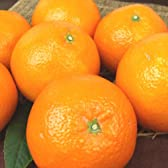 和歌山 有田産 伊予柑 いよかん わけあり柑橘5kg ご家庭用 和歌山県有田みかんの里から