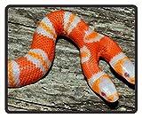 マウスマット両方向Milk Snake???Dangerous Black Mamba Snake Patternマウスパッド