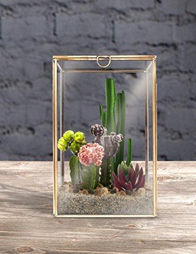 MyGift 植物用テラリウム 透明ガラスと真鍮製フレーム 卓上用キュリオケース シャドーボックス