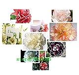 1プロフェッショナルパック約100種/レア・マルチ種カーネーションの花ナデシコキネンシスのパック新鮮な種子