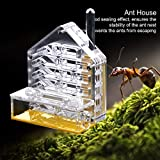 Yiteng アリ観察キット 蟻用飼育ケース 通気性 保湿性 アリ繁殖 昆虫飼育 透明アクリル 子供 趣味 自由研究 生活様式を観察 科学教育用 アリ餌やり 実用的