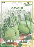 野菜の種 コールラビ・ビアンコ