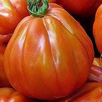 種子パッケージではありません植物:40+種子:トマト種子:チャーリー・チャップリントマト種子新鮮な種子。