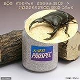 (昆虫)国産オオクワガタ幼虫(1匹) + 菌糸瓶 大夢B プロスペック 800cc 1本 説明書付 本州・四国限定[生体]