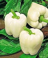100ピース5色ミックスイエローピープルレッドグリーンホワイトミックスピーマン盆栽野菜パプリカ:1