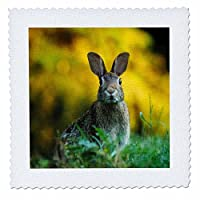 3drose Sven Herkenrath動物 – A Rabbit In The Autumn Grass Animal Rabbits – キルト正方形 16x16 inch quilt square qs_262464_6