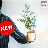 LAND PLANTS 【観葉植物】 ユーカリ・グニー苗 3号サイズ