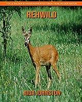 Rehwild: Tolle Bilder & Wissenswertes ueber Tiere in der Natur