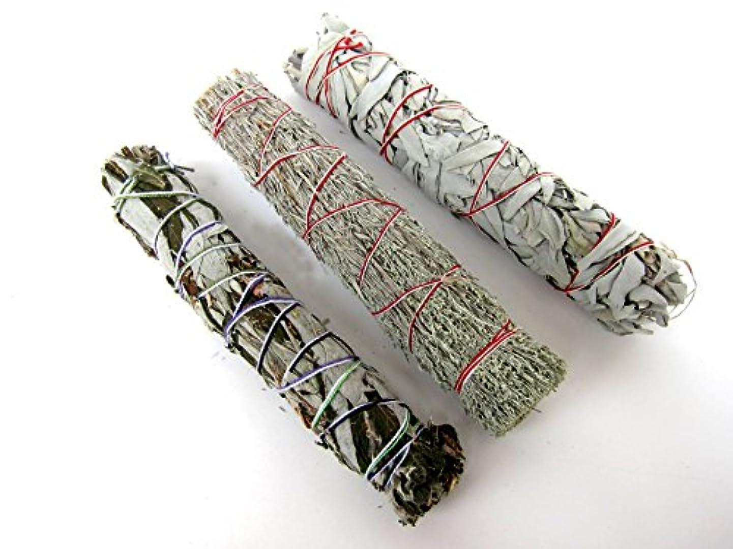 鎮痛剤平等病気セージSmudge Sticks Bundle of 3 SticksサンプラーセットLarge 8 – 9インチ