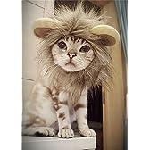 (つながる)Vedem 猫が ライオンに大変身 ウイッグ コスチューム (S) [並行輸入品]