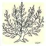 アンリ・マティス 低木 Henri Matisse: Le Buisson