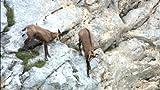ワイルドライフ 東欧の秘境 タラ渓谷 断崖に野生を見た[DVD]