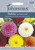 ガーデン・ペット・DIY通販専門店ランキング15位 JOFL 英国ジョンソンシード Dahlia Showpiece Mixed ダリア・ショーピース・ミックス