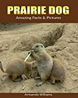 Prairie Dog: Amazing Facts & Pictures