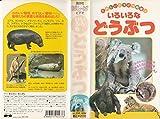 たのしいどうぶつ図鑑(3)「いろいろなどうぶつ」 [VHS]
