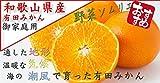 みかん 野菜ソムリエ が選んだ (御家庭用) 和歌山県産 有田みかん 和歌山直送 (5kg)