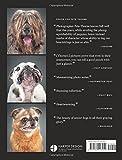Old Faithful: Dogs of a Certain Age 画像