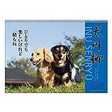 アートプリントジャパン 2020年 ダックス川柳カレンダー vol.003 1000109212