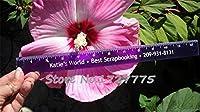 種子パッケージ: 赤:100秒ハーディとミックス色DIYホームガールはあなたのkの盆栽の木の最高の贈り物を鉢植え