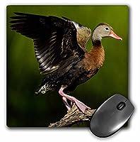 3dRose ブラック Bellied Whistling Duck 大人用 パーチド ツリー マウスパッド (mp_279449_1)