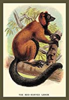 Buyenlarge 0-587-15622-8-P1218 The Red Ruffed Lemur Paper Poster 12 x 18 [並行輸入品]