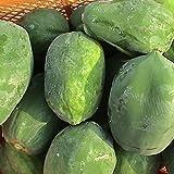 沖縄県産 青パパイヤ 野菜 約4kg (3玉-8玉) シリシリー ぱぱいやイリチーにどうぞ