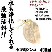 ( オススメ)タマミジンコ 400ml(100匹~)[生体]
