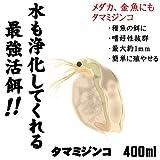 ( オススメ)タマミジンコ 400ml(100匹?)[生体]