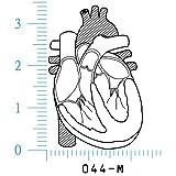 人体図ゴム印 心臓-M 044