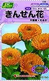 カネコ種苗 草花タネ728 きんせん花 むらじ 10袋セット