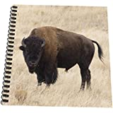 Danita Delimont – Bison – ワイオミング州、イエローストーン国立公園、Bison in Lamar Valley – us51 jwi0359 – Jamie and Judy Wild – Drawing Book 4x4 notepad db_97419_3