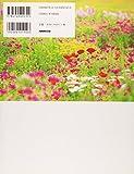 紫竹おばあちゃんの幸福(しあわせ)の庭 画像