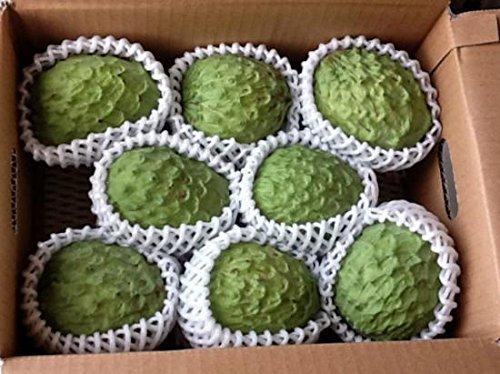 訳あり【期間限定】 アテモヤ (アフリカン プライド) 約2kg (4〜8個) 中村果樹園 森のアイスクリーム 低カロリー・低脂肪 珍しい南国フルーツ