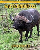 Kaffernbueffel: Erstaunliche Bilder und Fakten ueber Kaffernbueffel